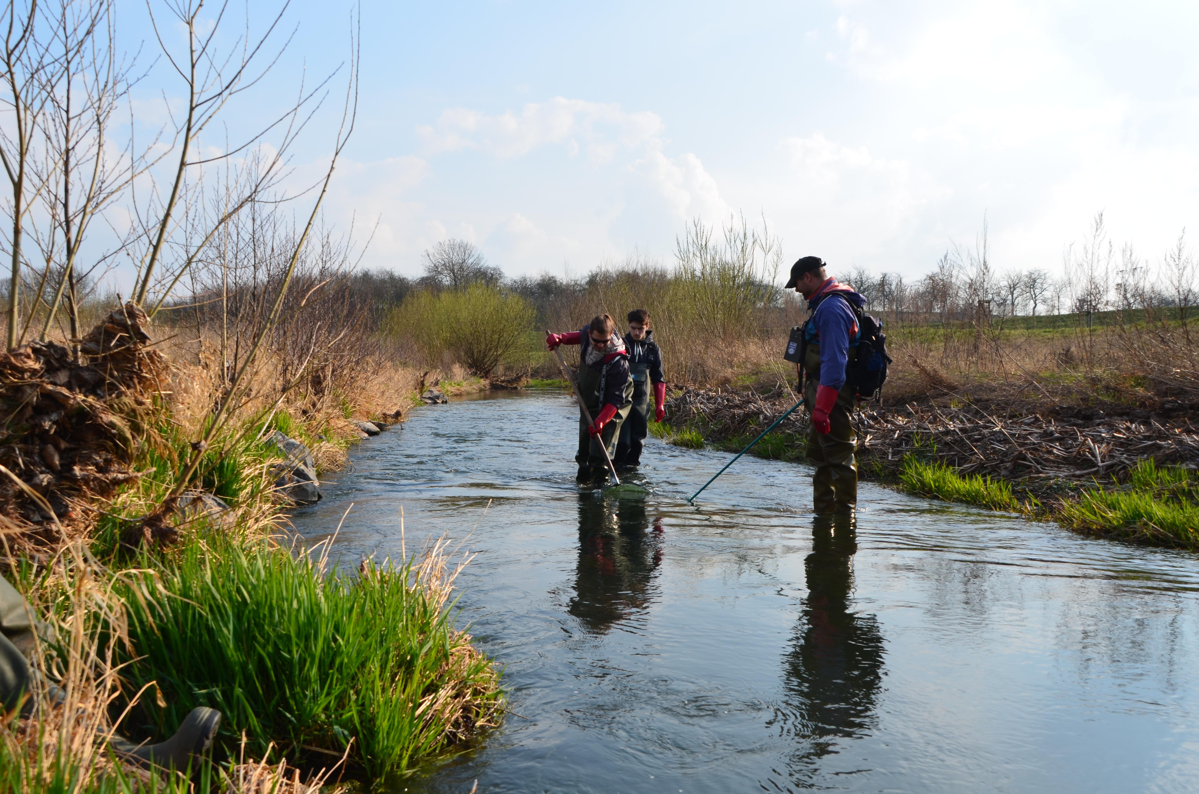 Foto mit drei Personen, die in der Helme stehend Elektrobefischungen durchführen.