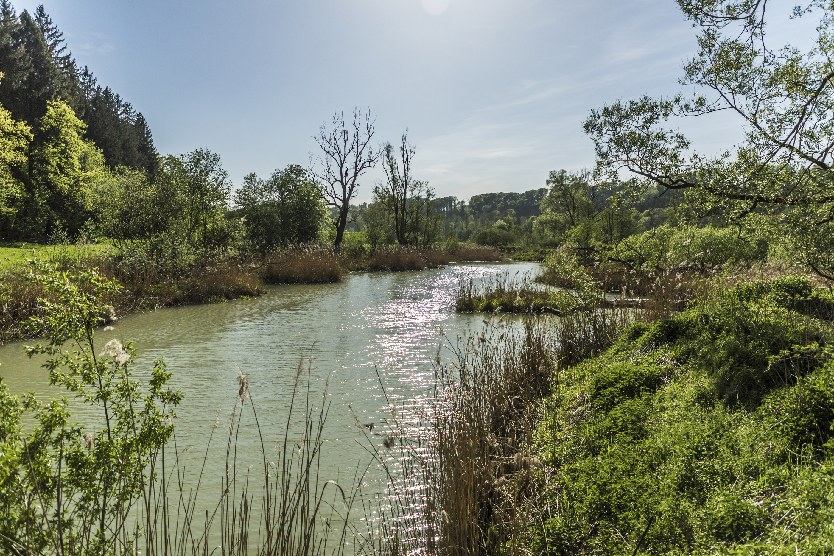 Nahaufnahme des Altwassers bei Thalham mit naturnaher Ufervegetation.