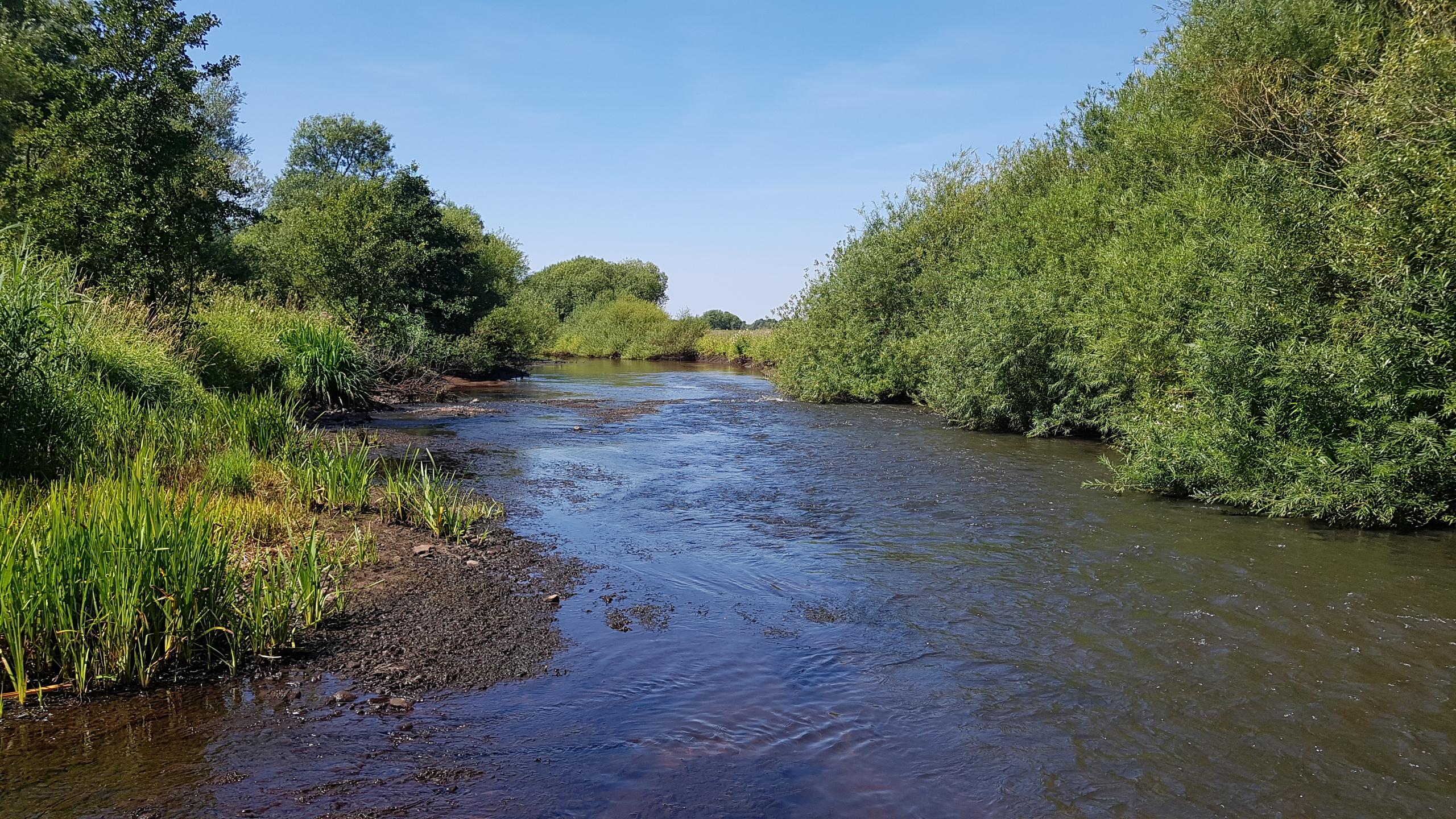 Nahaufnahme der Wümme. Beidseitig hat sich entlang des Gewässers ein dichter Uferbewuchs entwickelt. Im Gewässer bilden Längsbänke aus Kies wertvolle Strukturen.