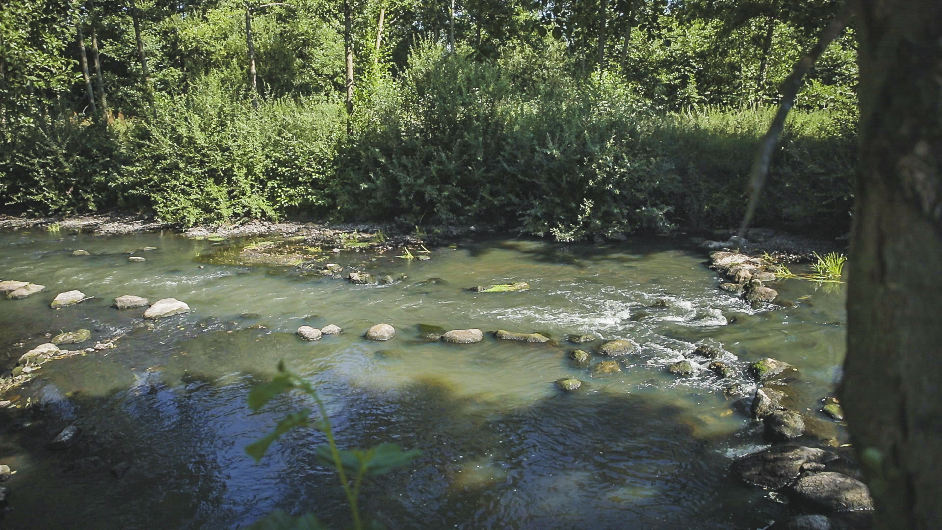 Foto: Niedrigwasserrinne in der Mitte der Wümme, die als Fischwanderhilfe dient. Als Sicherung der Niedrigwasserrinne wurden große Steine linienhaft in das Gewässer eingebracht.
