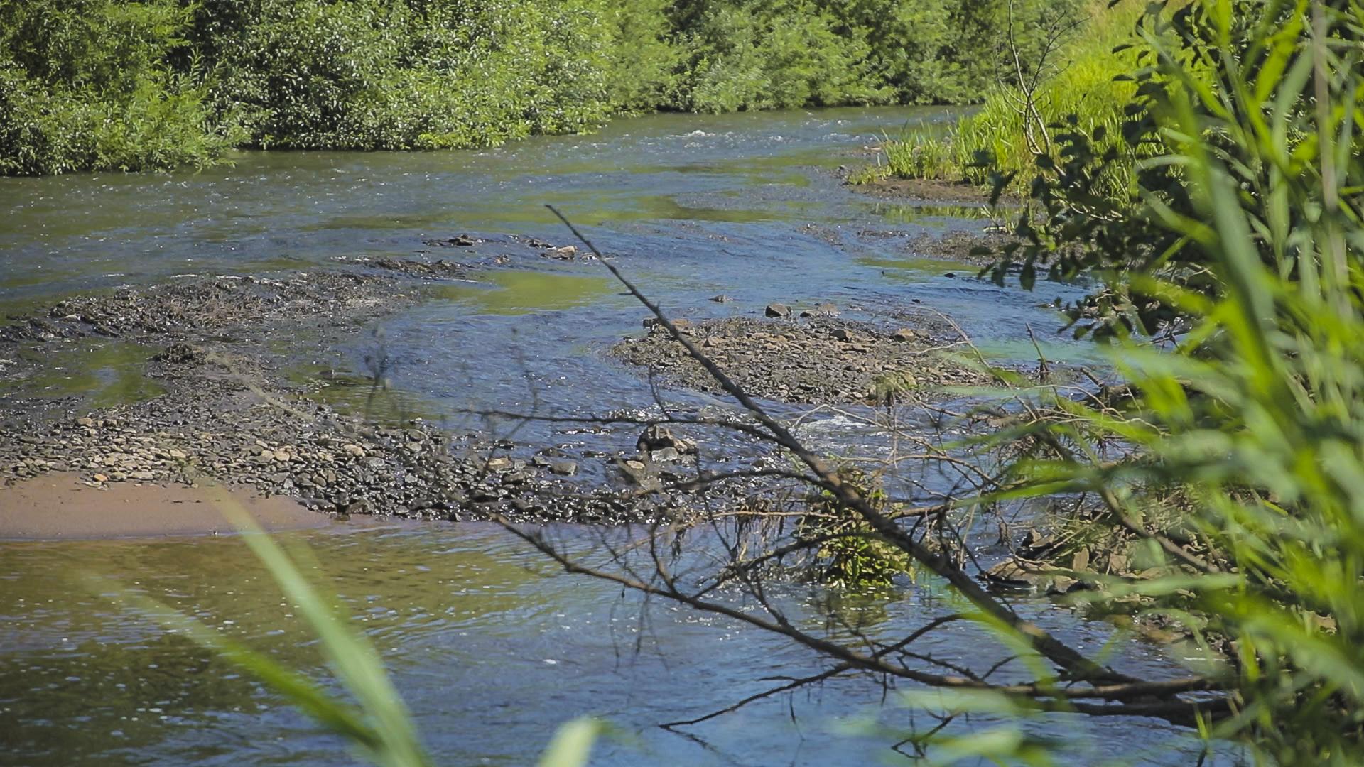 Foto: Kiesbänke in flacher Wümme als Verbesserung der Gewässerstruktur: Die Ufer sind mit dichter Vegetation bewachsen.