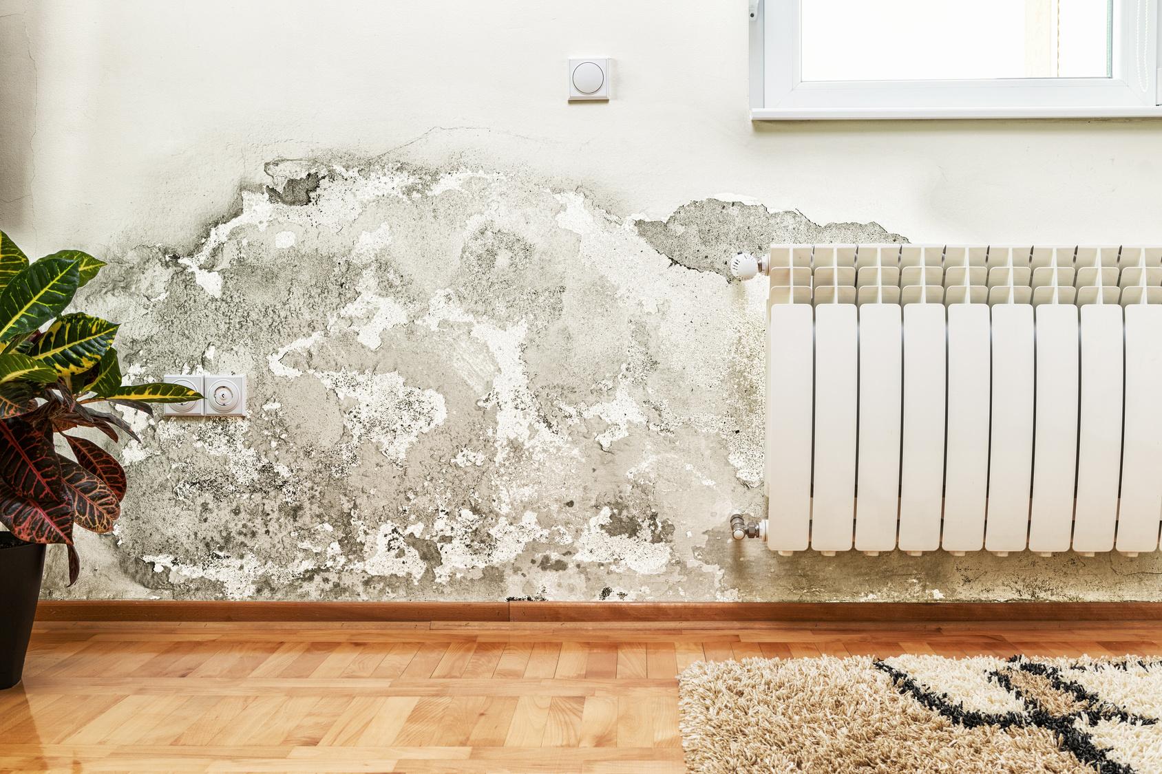 t ren und fenster auf gegen schimmel umweltbundesamt. Black Bedroom Furniture Sets. Home Design Ideas