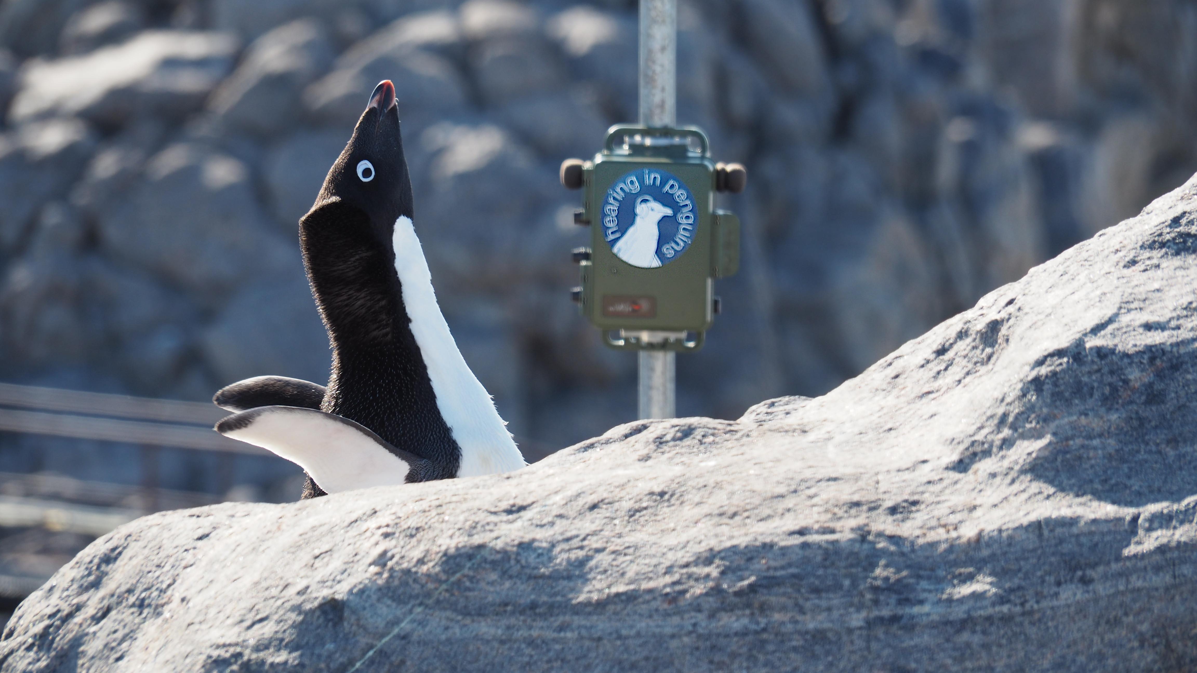 Ein Pinguin vor einem Messgerät.