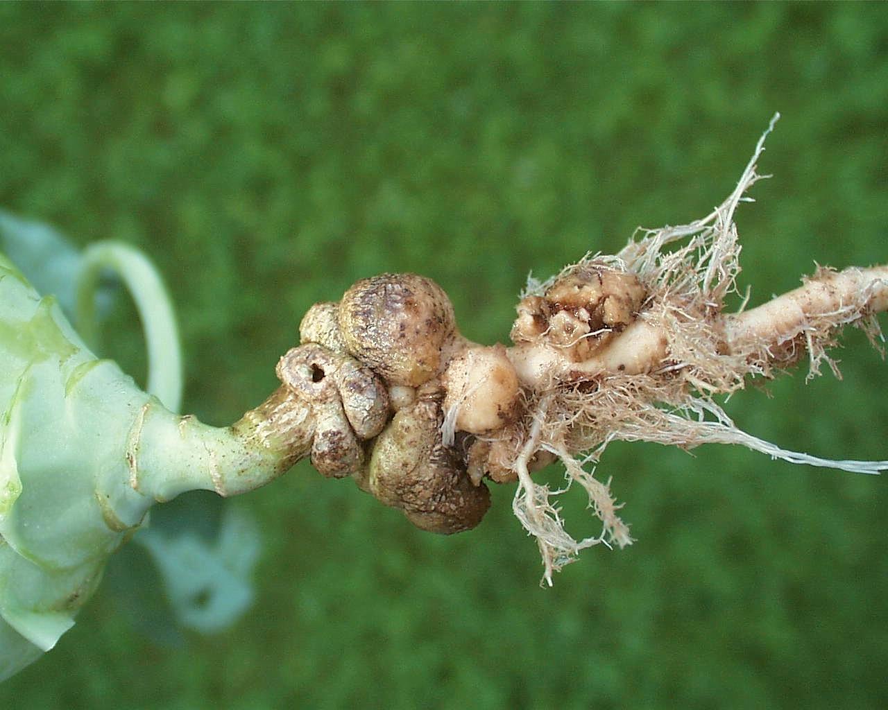 pflanzenschutz im gemüsegarten | umweltbundesamt