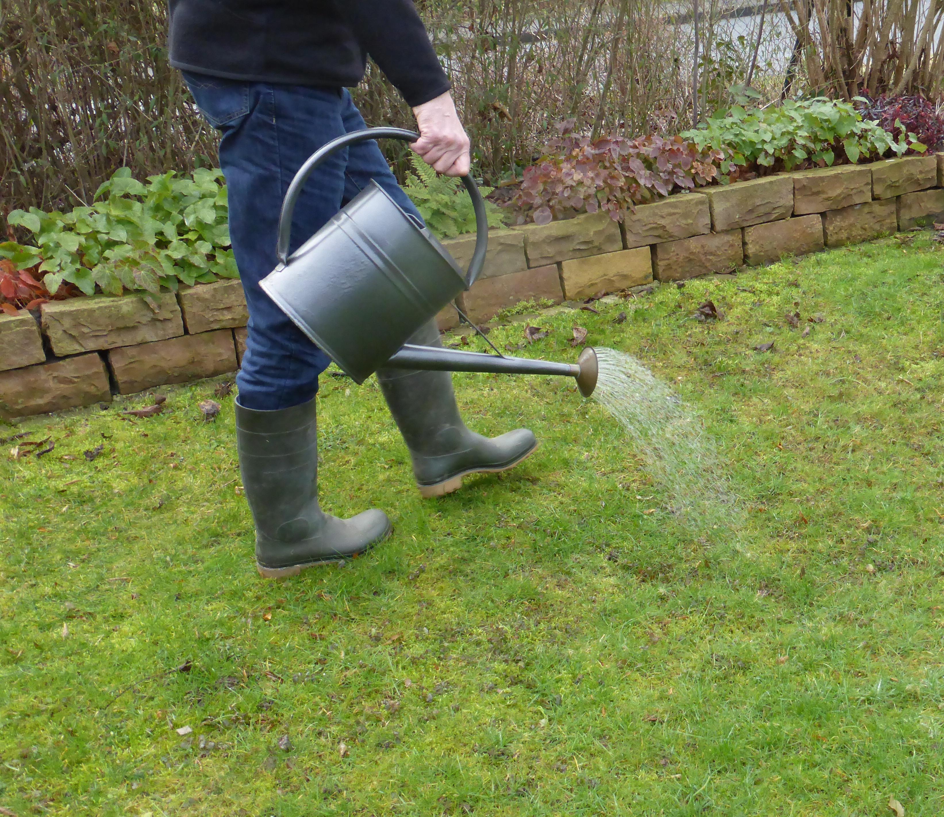Person gießt Rasenfläche mit Gießkanne.