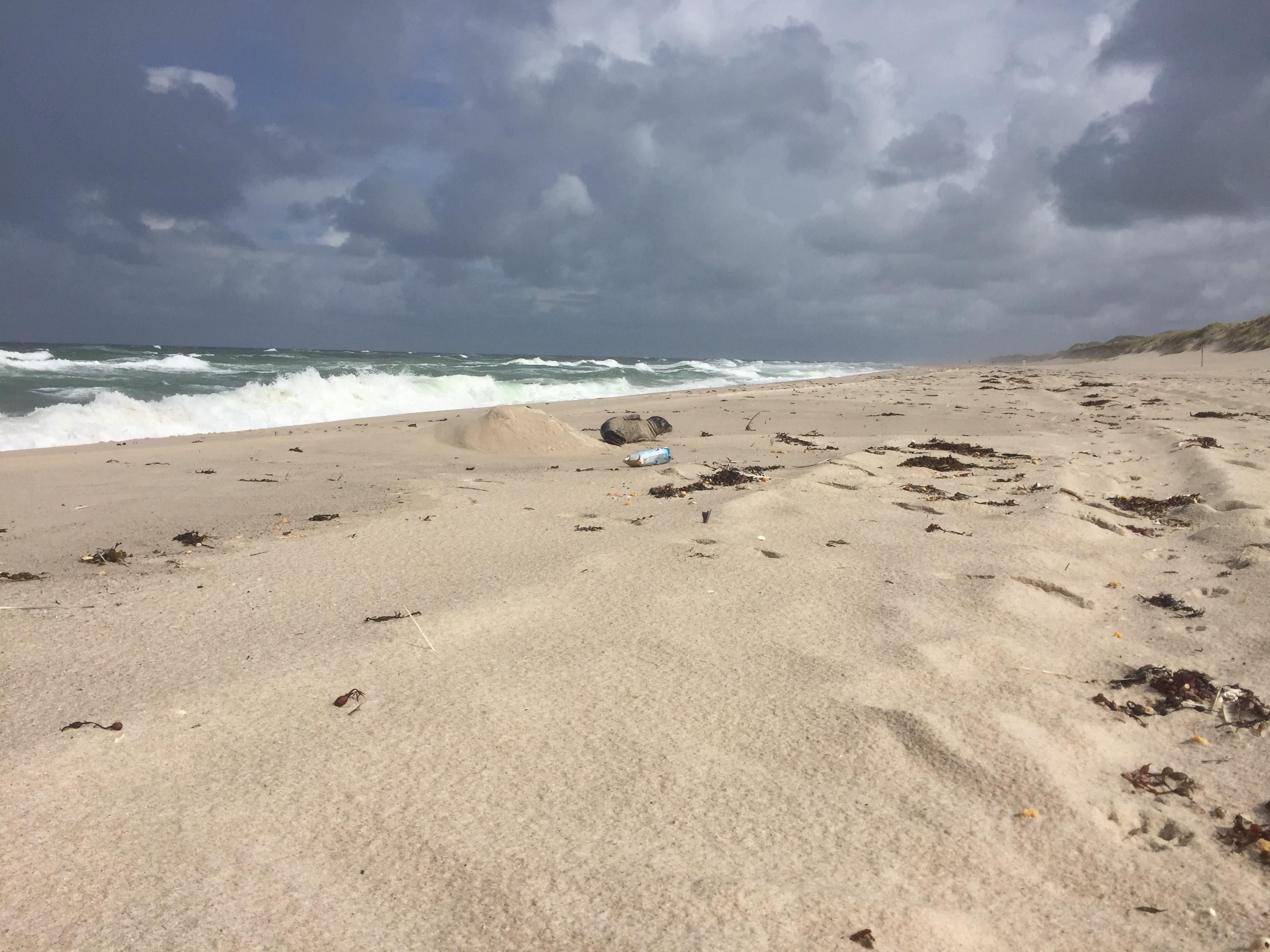 Meeresschutz geht uns alle an! | Umweltbundesamt