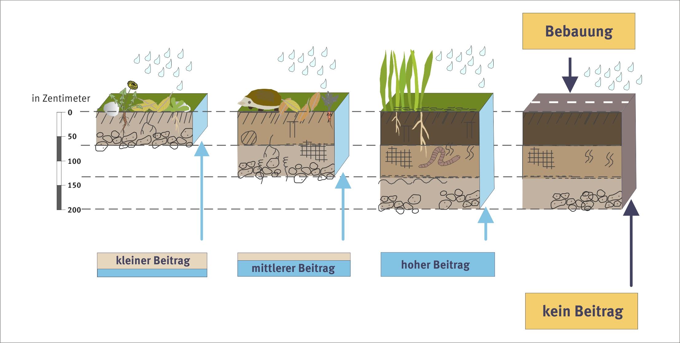 Bodenfunktionen umweltbundesamt for Boden zusammensetzung