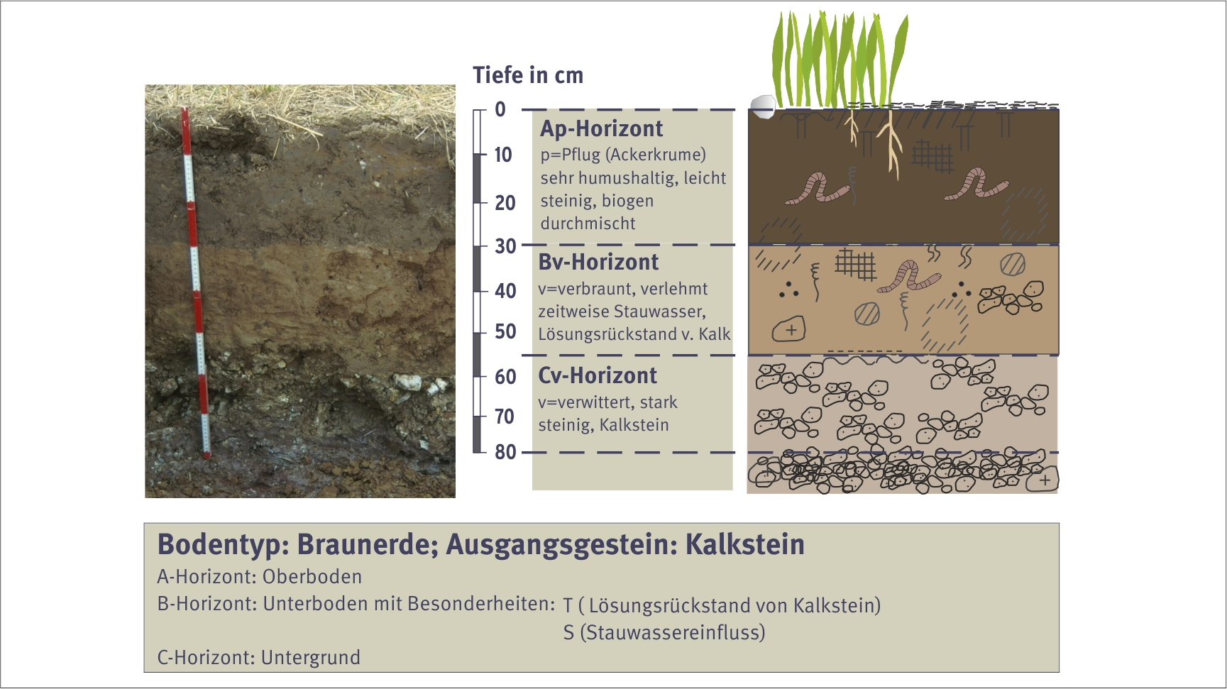 Characteristics of brown earth soils for Information about different types of soil