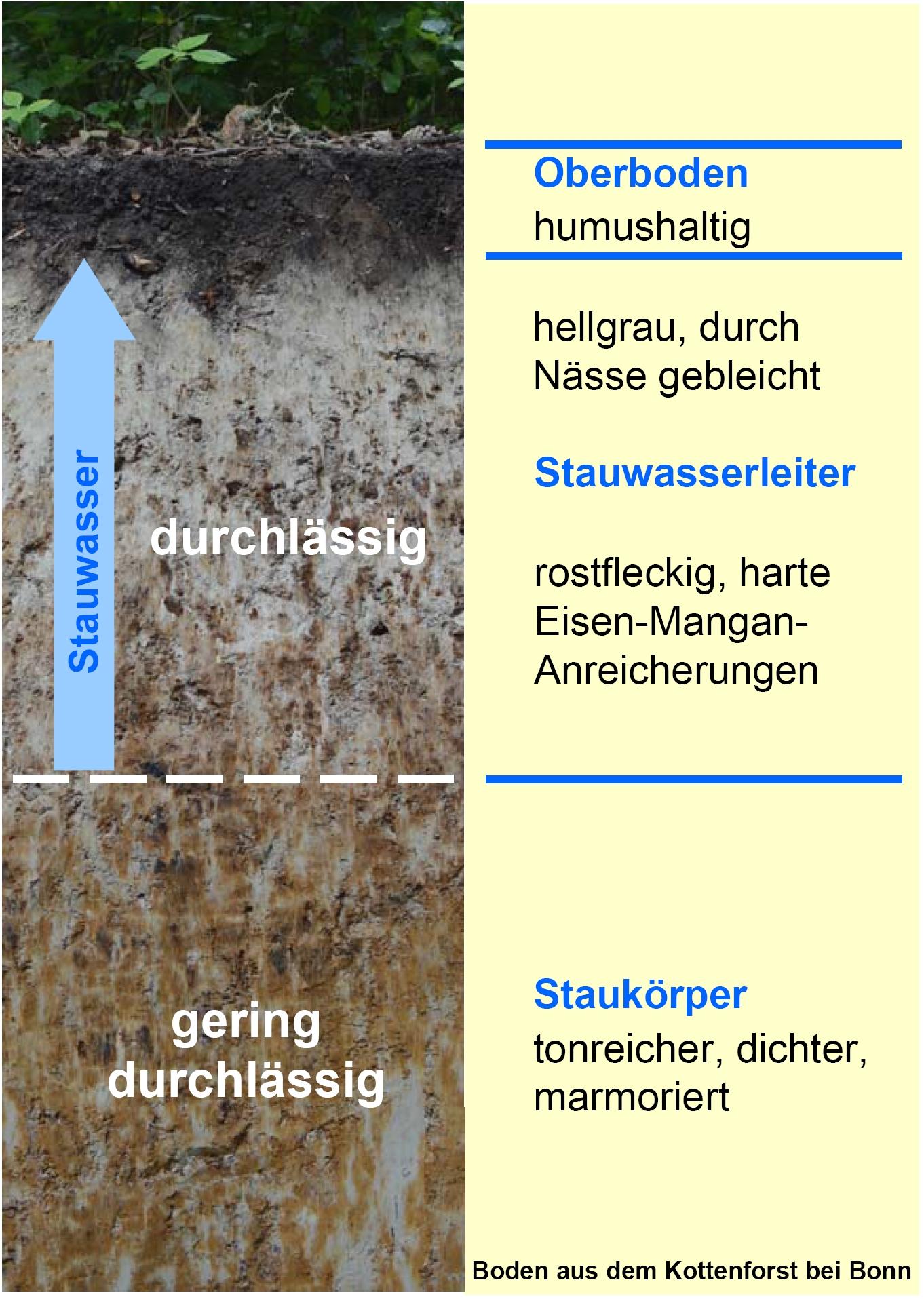 Ein Bodenprodil des Stauwasserbodens wird grafisch erläutert.