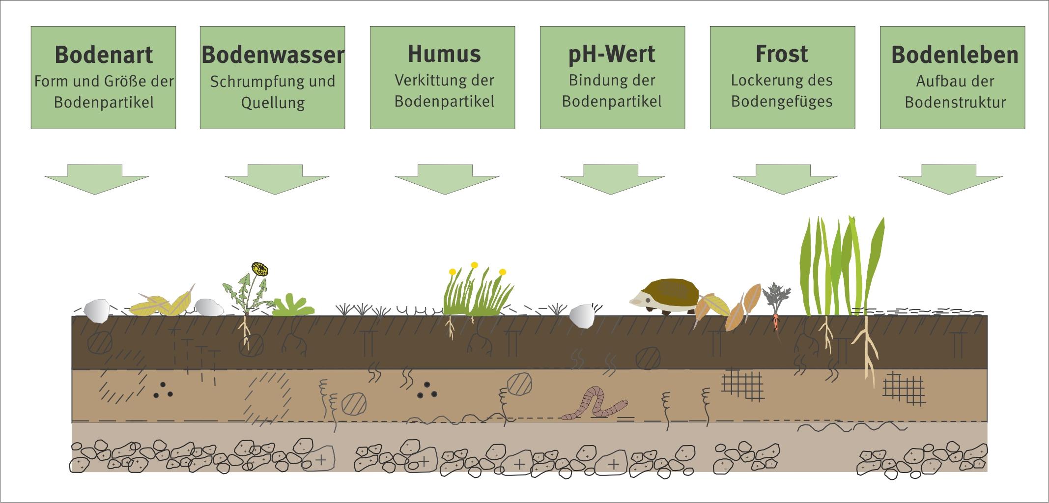 Verdichtung umweltbundesamt for Boden zusammensetzung