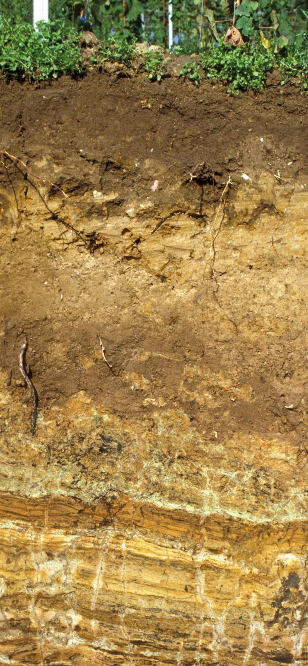 Das Profil eines Weinbergsbodens - hier das Motiv zum Boden des Jahres 2014