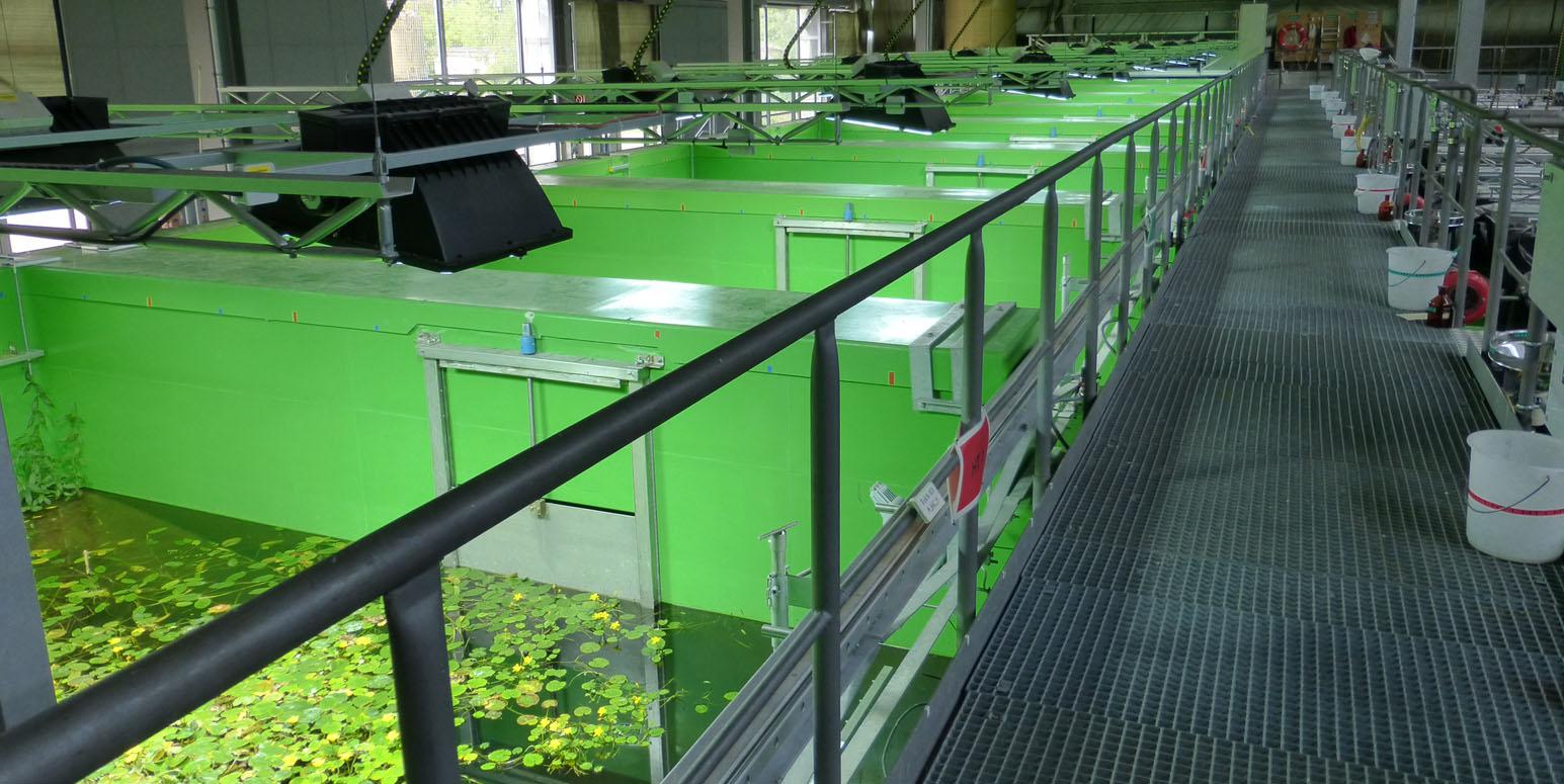 in einer Halle eine Reihe Wasserbecken, die durch grüne Trennwände getrennt und mit Pflanzen bestückt sind