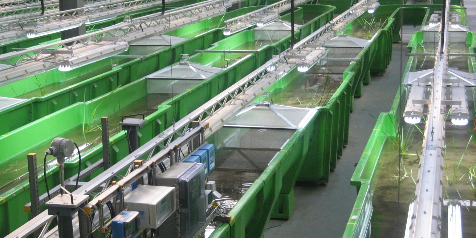 künstliche grüne Rinnen in einer Halle, mit Wasser gefüllt und mit Pflanzenbewuchs