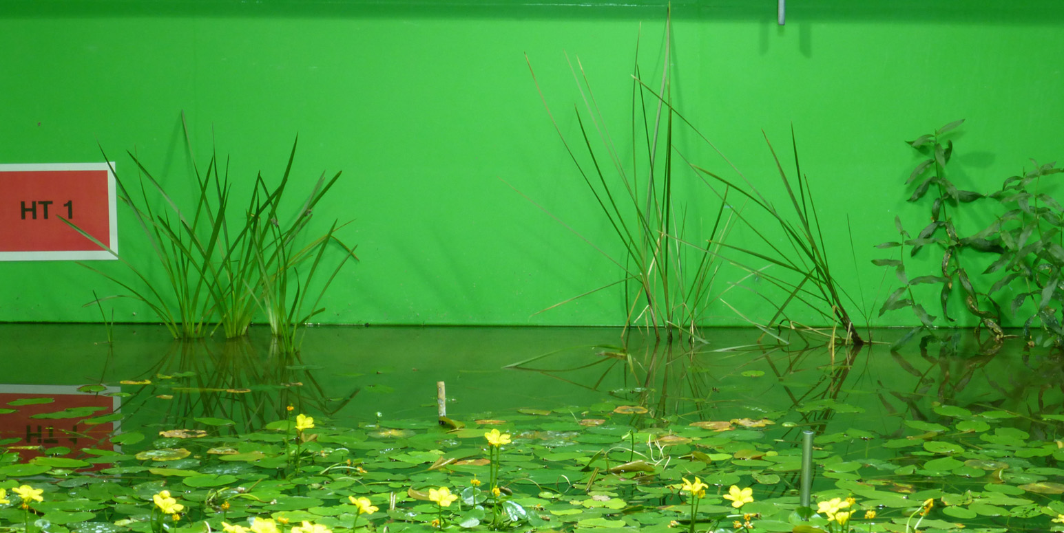Wasser und Wasserpflanzen in einem grünen Becken