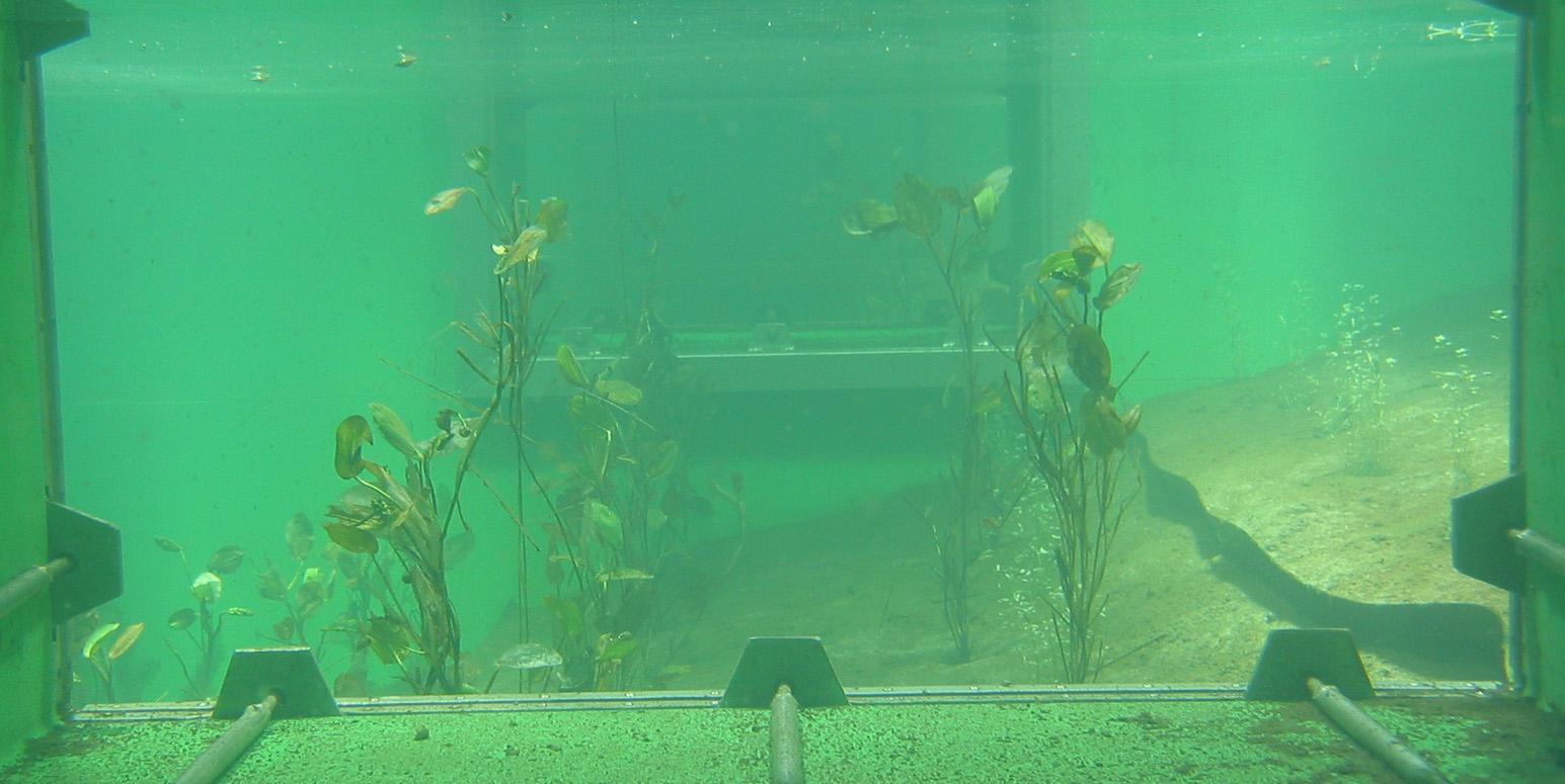 Unterwasserfoto eines Teiches durch die geöffnete Seitenluke, grünlich-trübes Wasser, Wasserpflanzen und sandiger Untergrund