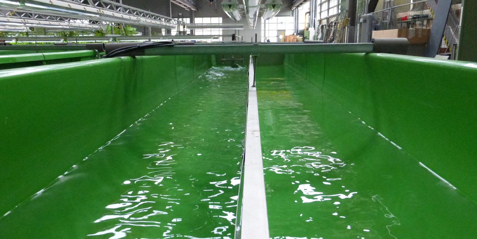 Blick in eine der grünen, wassergefüllten Fließrinnen in der FSA