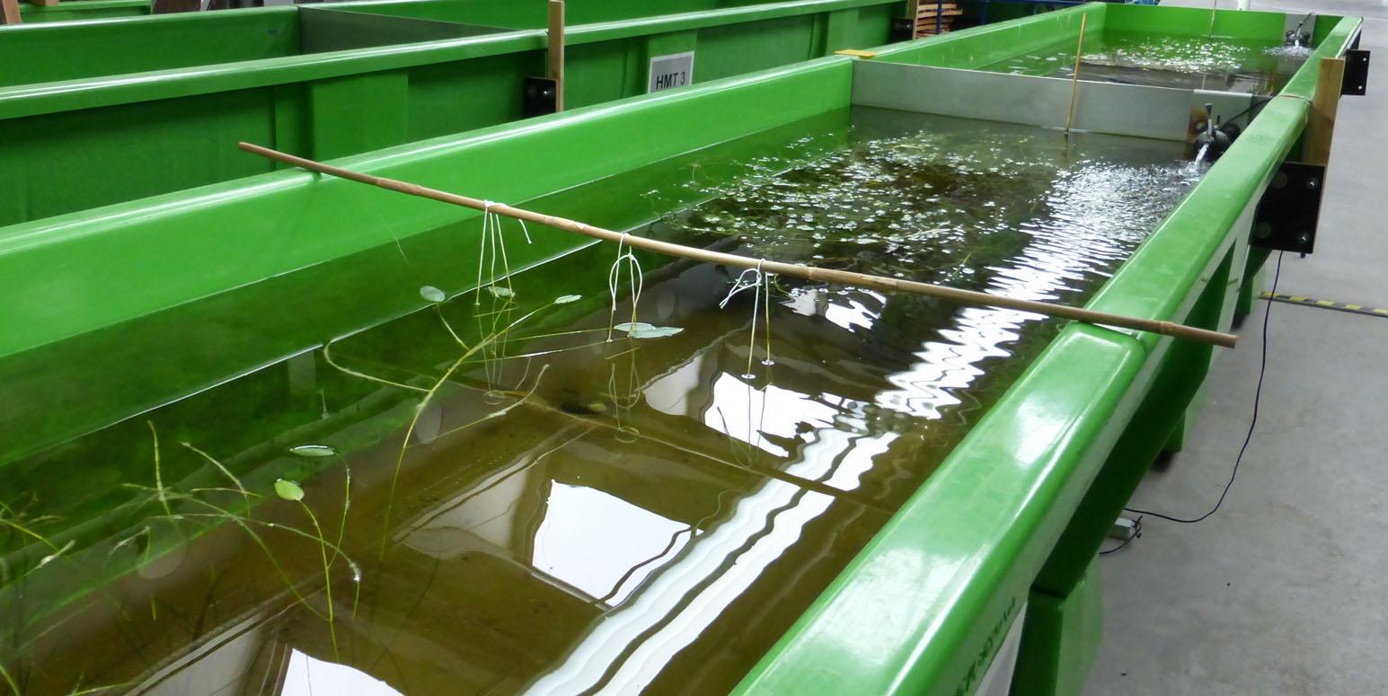 grüne künstliche Rinne mit Wasser und Wasserpflanzen in einer Halle
