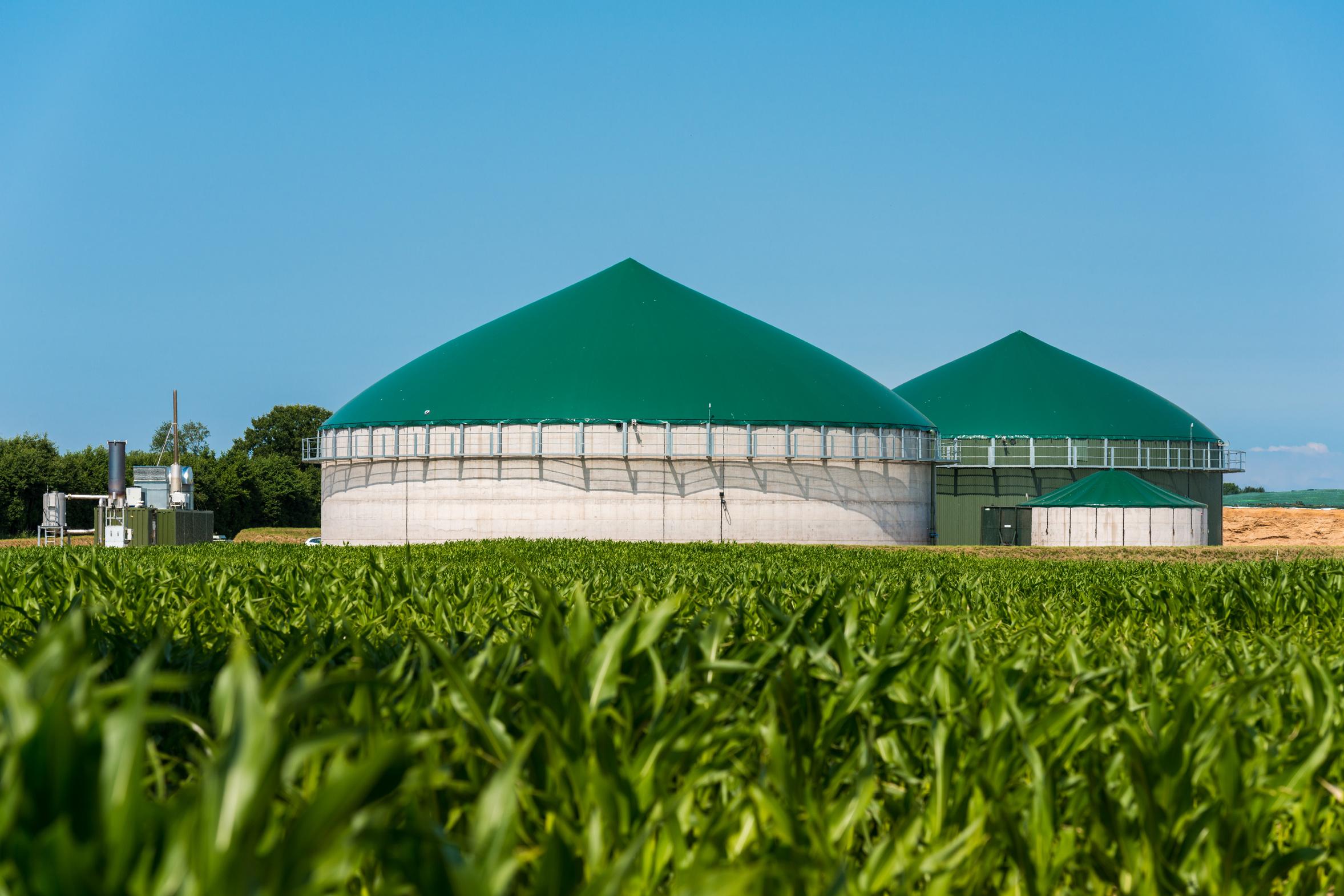 Biogasanlage, davor ein Maisfeld