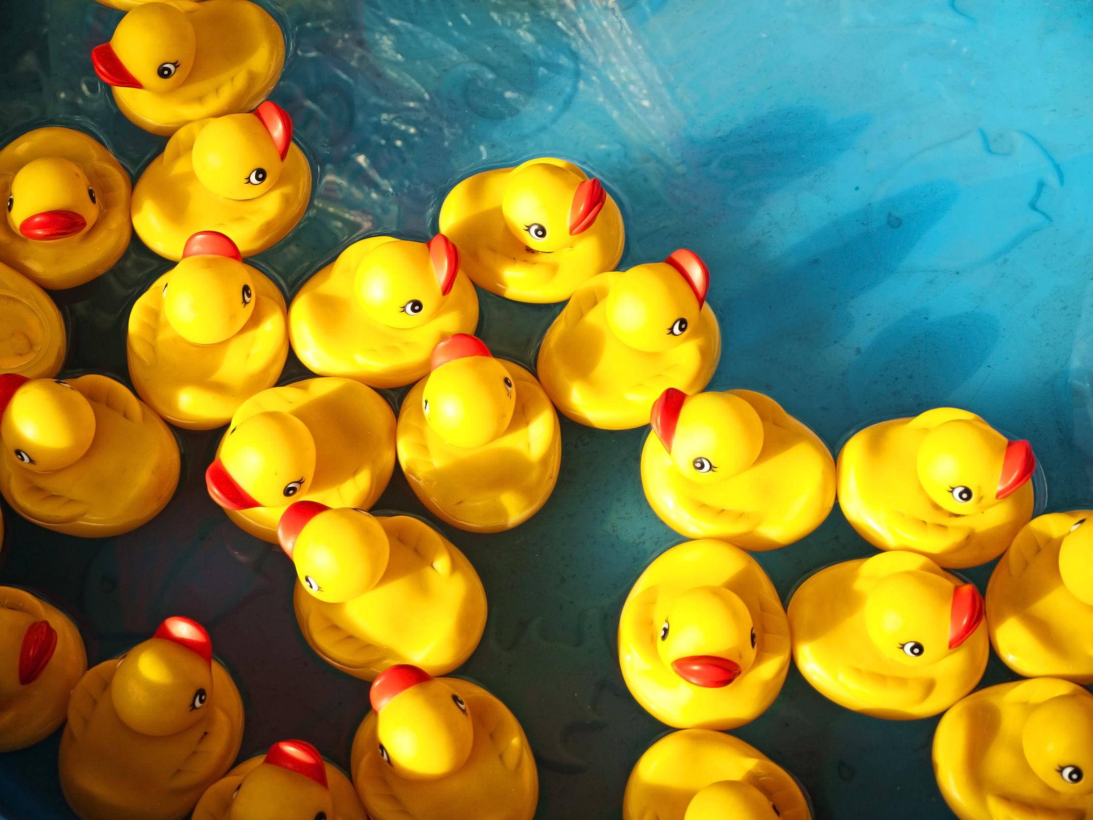 gelbe Quietsche-Entchen in türkisblauem Wasser