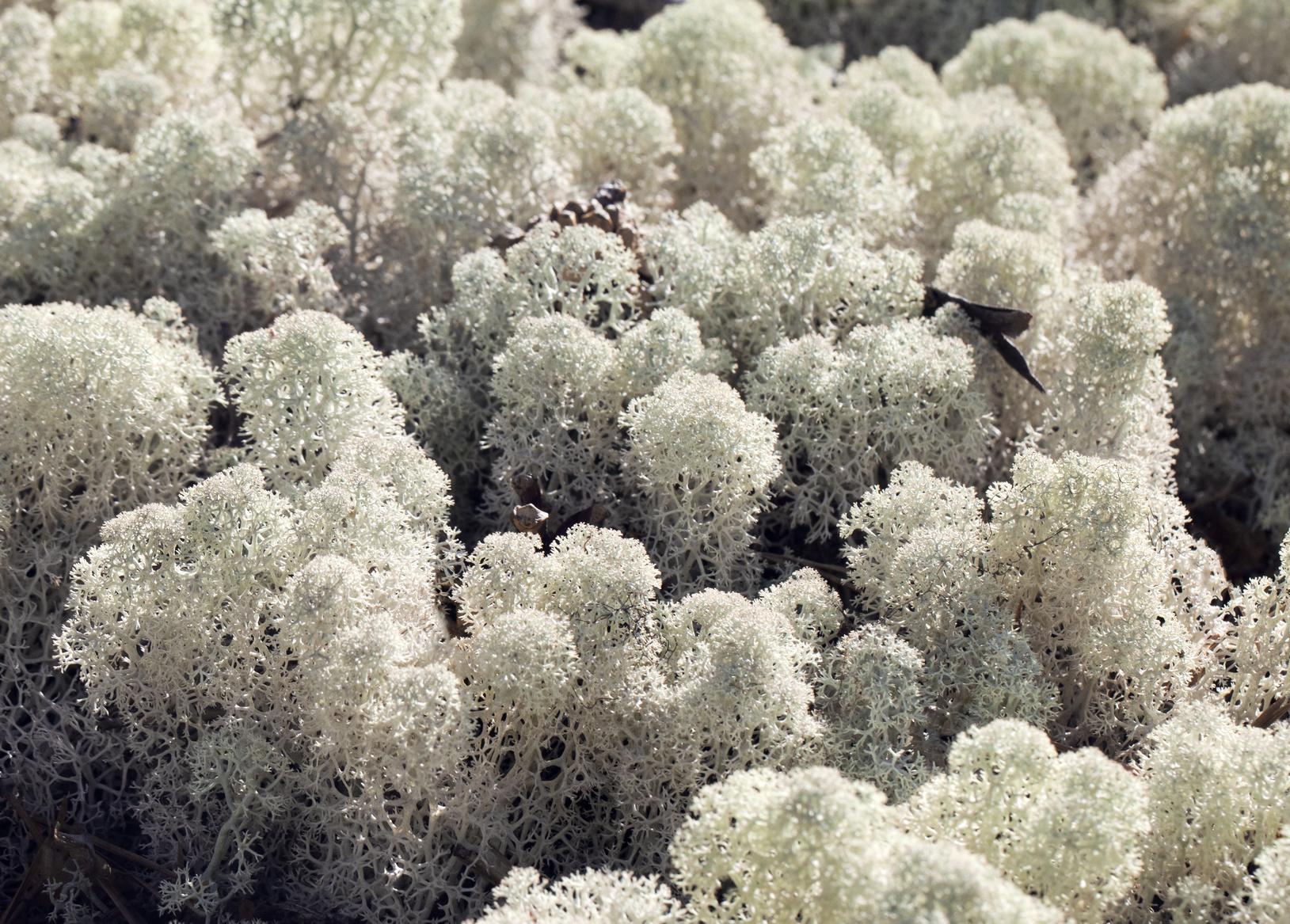 Flora und Fauna der Arktis | Umweltbundesamt