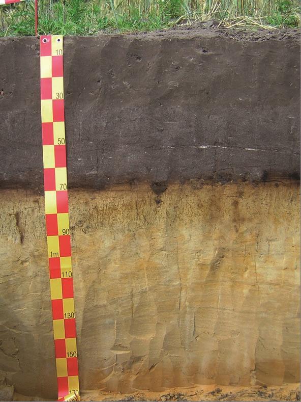 """Querschnitt des Bodentyps """"Grauer Plaggenesch"""" von der mit Gras bewachsenen Oberfläche bis zu 1,7 Metern Tiefe."""