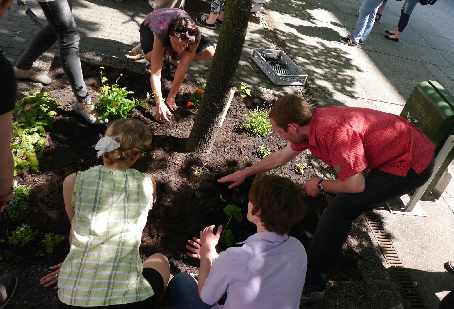 Mitarbeiter des UBA pflanzen in der Dessauer Innenstadt ein Blumenbeet (Baumscheibe)