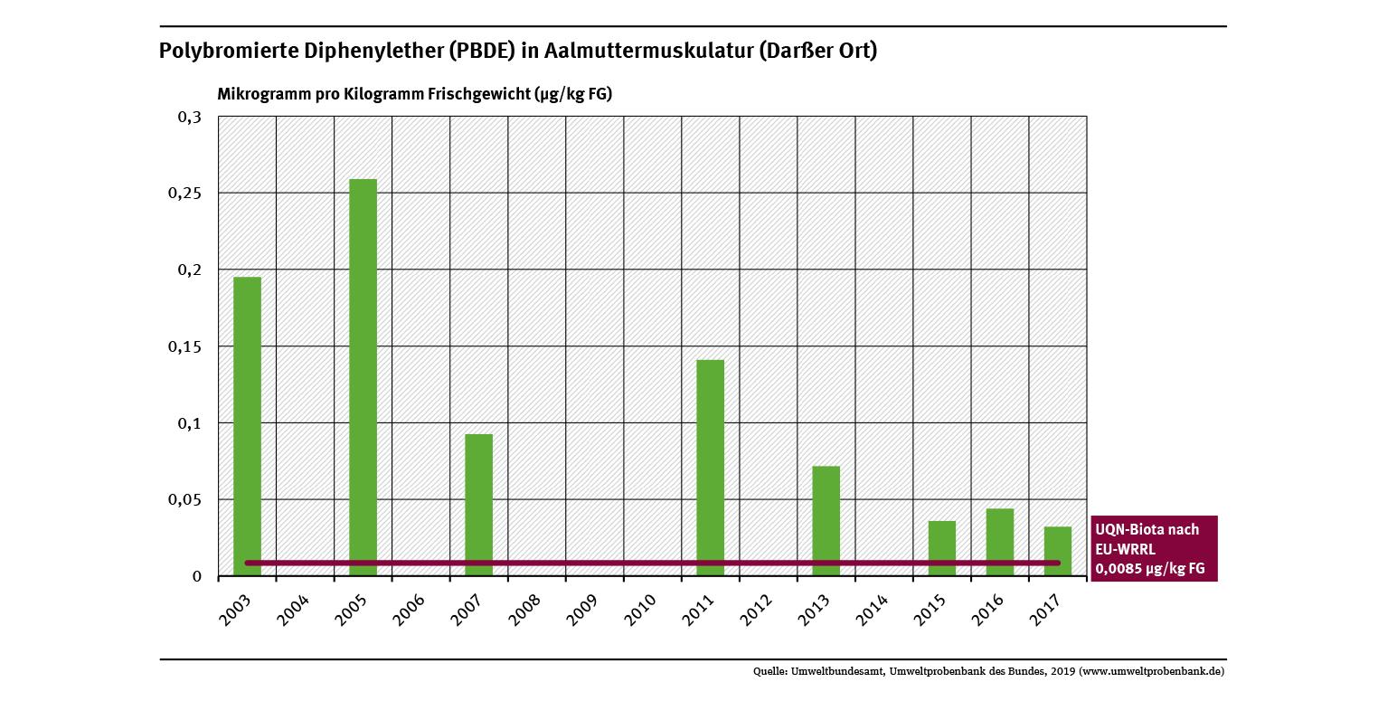 Aalmuttern vom Darßer Ort sind stark mit den bromierten Flammschutzmitteln PBDE belastet und überschritten die Umweltqualitätsnorm um ein Vielfaches. 2017 lagen die Konzentrationen noch 3,5 Mal höher als die UQN von 0,0085 µg/kg FG.