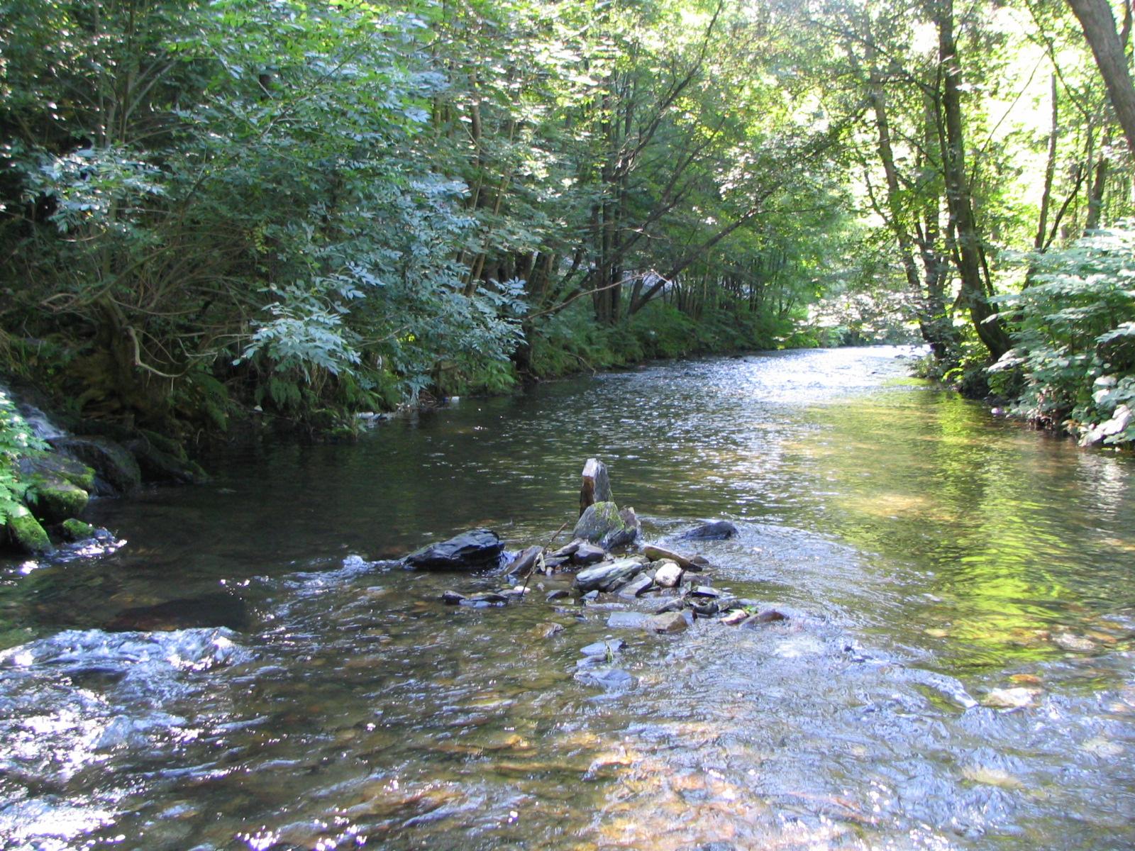 Ein breiter Bach der einer Biegung folgt mit Bäumen und  Gebüsch am Rand bei Sonnenlicht
