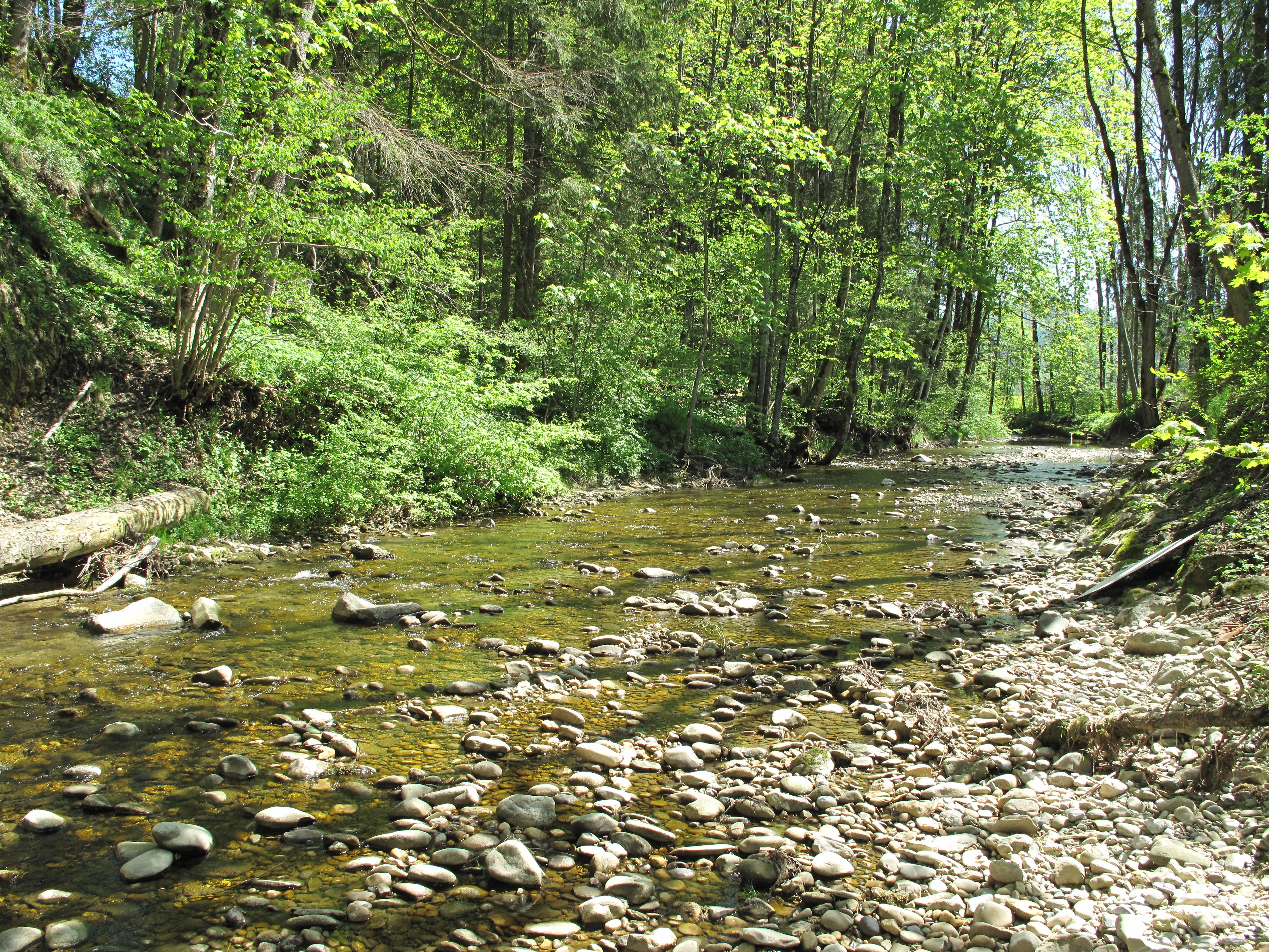 Breiter sehr flacher Fluss, dessen Grund mit vielen kleinen Steinen versehen ist.