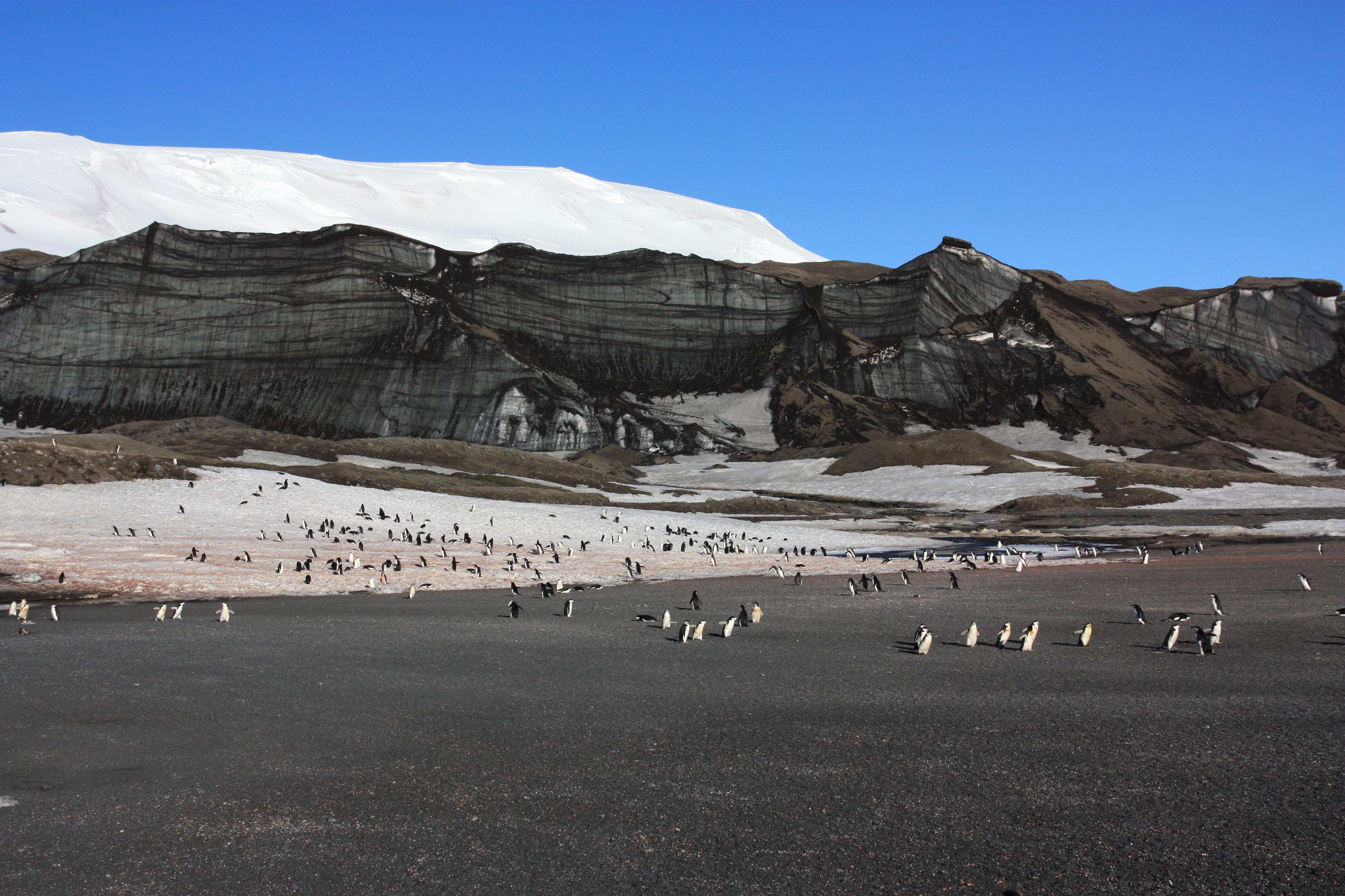 Im Vordergrund läuft eine große Gruppe Pinguine auf die Kamera zu. Im Hintergrund sieht man Berge.
