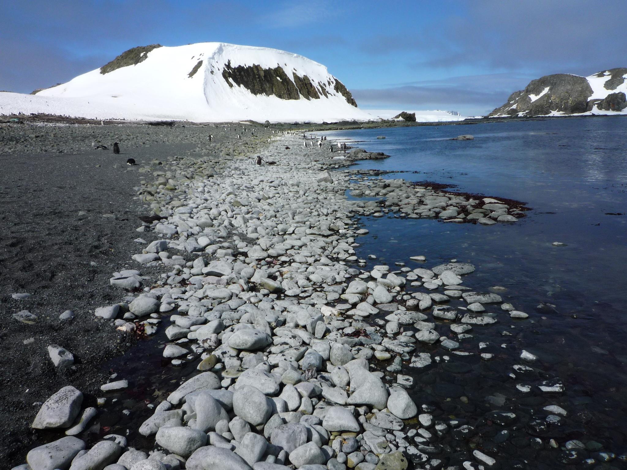 Man blickt an der antarktischen Küste entlang. Der Strand ist mit Steinen bedeckt. Etwas weiter hinten sind Pinguine zu sehen. Im Hintergrund ragt ein teilweise schneebedeckter Berg auf.