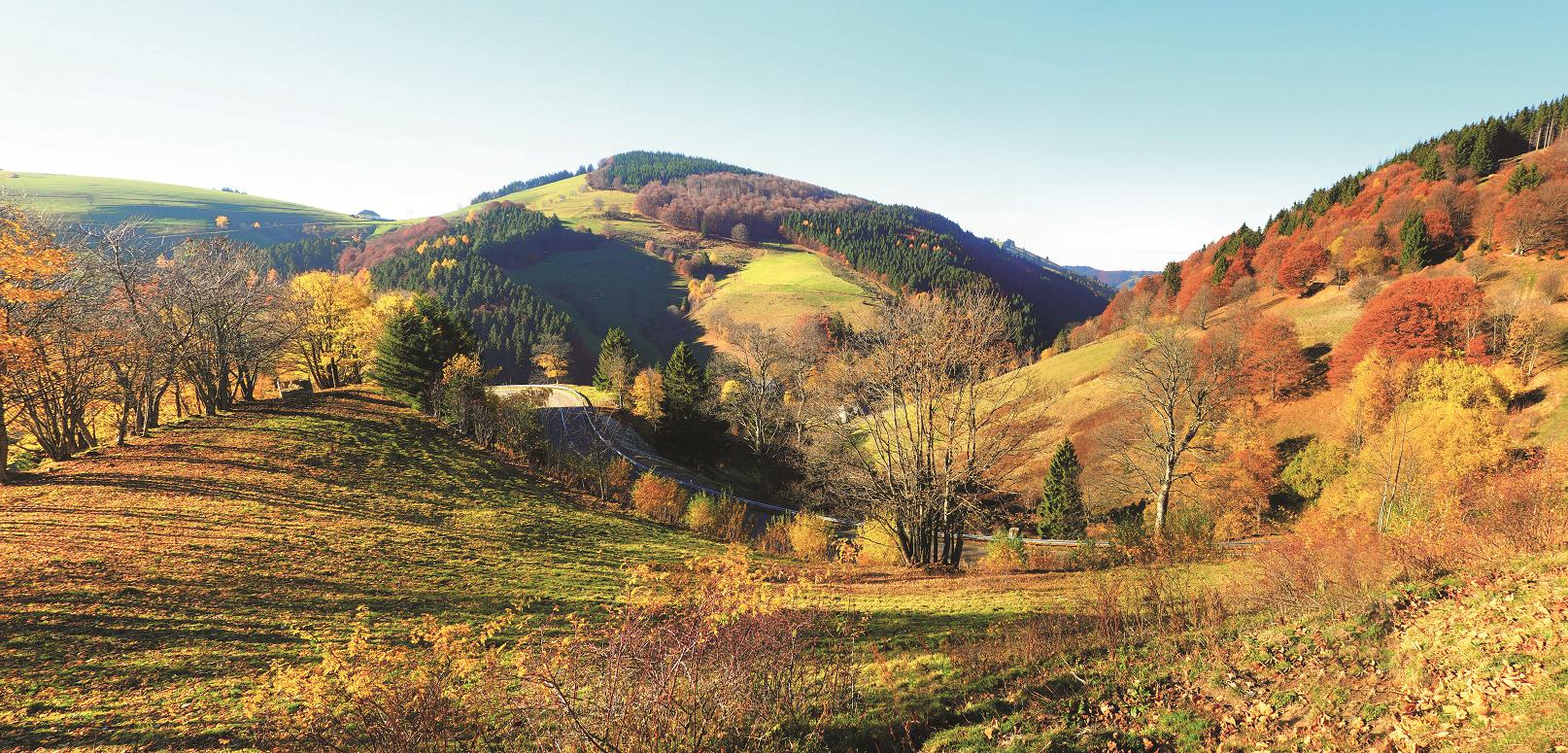 Das Bild zeigt eine hügelige Landschaft mit Wiesen, Hecken, Baumgruppen und Waldflächen im herbstlichen Licht.