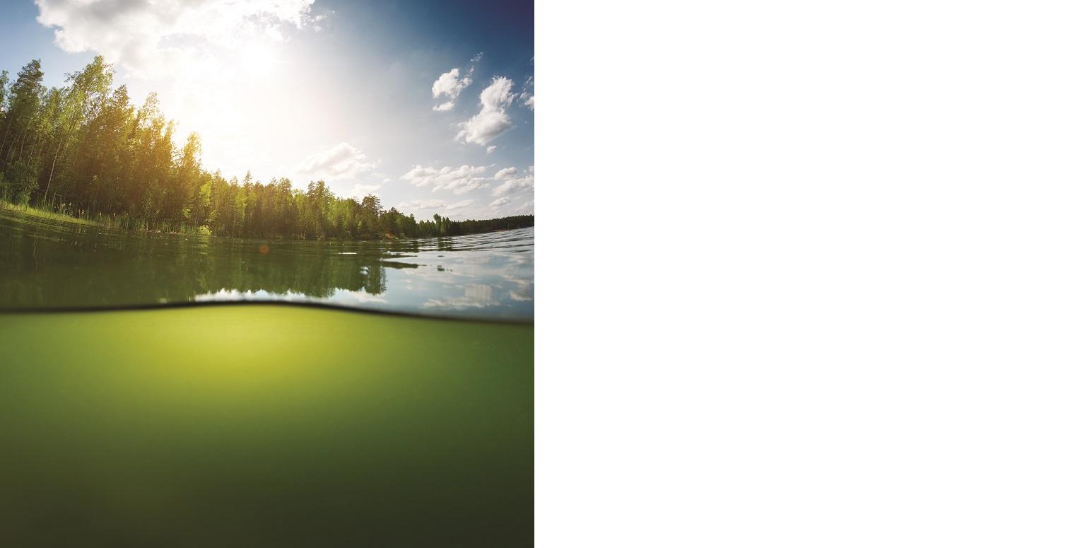 Das Bild ist halb unter Wasser, halb über der Wasseroberfläche eines Sees aufgenommen. Das Wasser erscheint olivgrün. Das Ufer des Sees ist teilweise mit Bäumen bestanden.