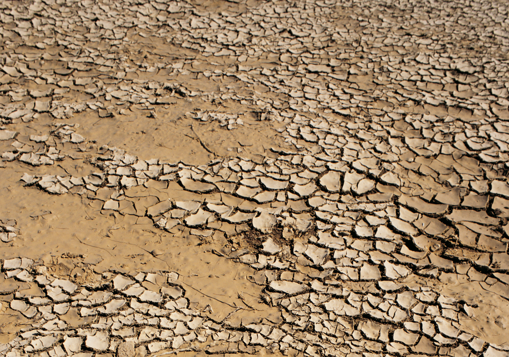 Ten million hectares of arable land worldwide are \'lost\' every year ...