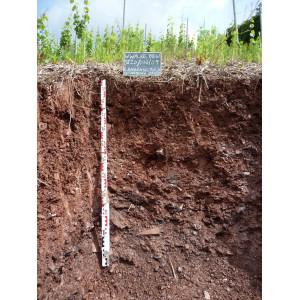 Das Bodenprofil am Standort Alzenau-Michelbach, Braunerde