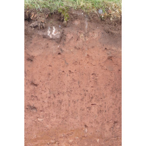 Das Bodenprofil am Standort Bürgstadt, Typ Braunerde aus Bundsandstein