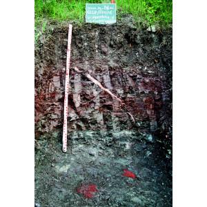 Das Bodenprofil am Standort Castell, Typ Gipskeuper mit Alabastereinschlüssen