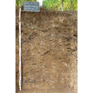 Das Bodenprofil am Standort Retzstadt, Typ Muschelkalk (vorwiegend Kalkstein z.T. dolomitisch)
