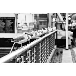12 Möwen sitzen in einer Reihe nebeneinander auf dem Geländer einer Brücke