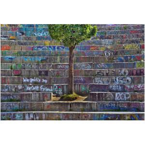 Auf einer mit Graffiti bemalten Betontreppe fehlt eine Stufe, den Platz füllt nun ein Laubbaum