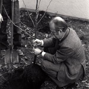 Heinrich von Lersner pflanzt ein Bäumchen: Der UBA-Präsident übernahm die Baumpatenschaft für zwei Gingkos auf dem UBA- Gelände am Bismarckplatz. Die bis heute existierende Baumpaten-Aktion hat der Berliner Künstler Ben Wagin ins Leben gerufen.