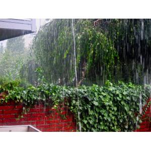 Eine rote imt Efeu bewachsene Backsteinmauer und ein Baum in starkem Regen