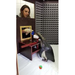 Doktorandin Helen Rößler beim Training der Pinguine in der Schallkammer im Meeresmuseum in Stralsund