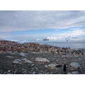 Eselspinguinkolonie mit Kreuzfahrtschiff im Hintergrund