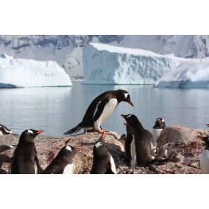 Eine Gruppe Pinguine sitzt und steht auf einem Erdhügel. Dahinter ist Wasser auf dem Eisberge schwimmen. Im Hintergrund ist ein schnee- und eisbedecktes Gebirge.
