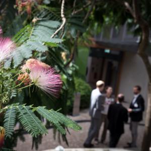 Teilnehmerinnen und Teilnehmer stehen im Atrium vor dem Eingang zum Workshop Raum. Der Blick geht im Vordergrund durch  Blätter und rote Blüten des Mimosenbaumes.