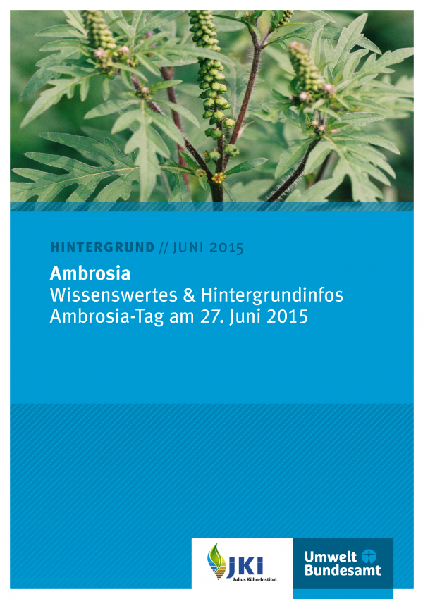 """blaues Cover des Hinrtergrundpapiers """"Ambrosia: Wissenswertes & Hintergrundinfos - Ambrosia-Tag am 27. Juni 2015"""" vom Juni 2015. Oben ein Foto einer Ambrosia-Pflanze, unten die Logos vom Julius Kühn-Institut und Umweltbundesamt"""