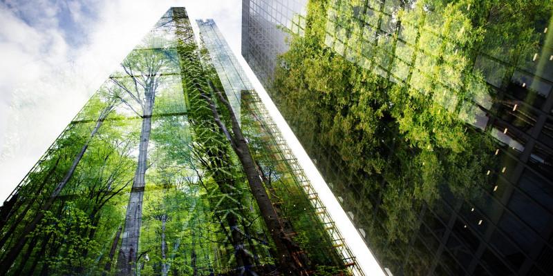 Bäume spiegeln sich in Glasfassaden von Hochhäusern