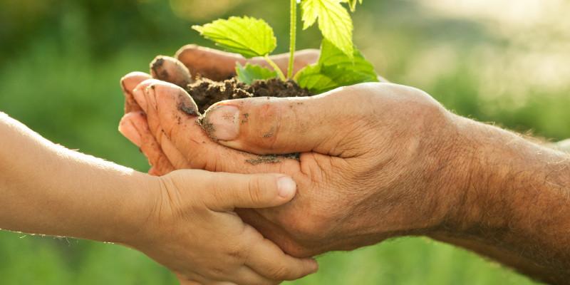 Auf dem Foto sind eine Kinderhand und eine Erwachsenenhand zusehen, die gemeinsam eine junge Pflanze mit Erdballen halten.