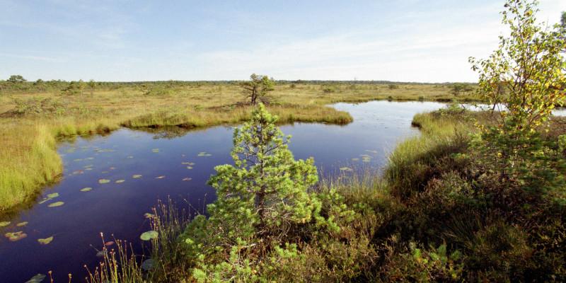 Bild des waldfreien Bereichs des Zehlau-Moores